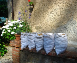 And in local news the potatoes are ready - five sacks of potatoes sitting on a wall